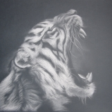 """""""Roar!"""", 50x70, gessetto su carta, 2014."""