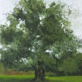 """Un du tree"", 18x24, olio su cartone telato, 2014."