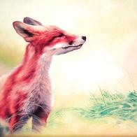 """Foxy"", 50x50, olio su tela, 2015."
